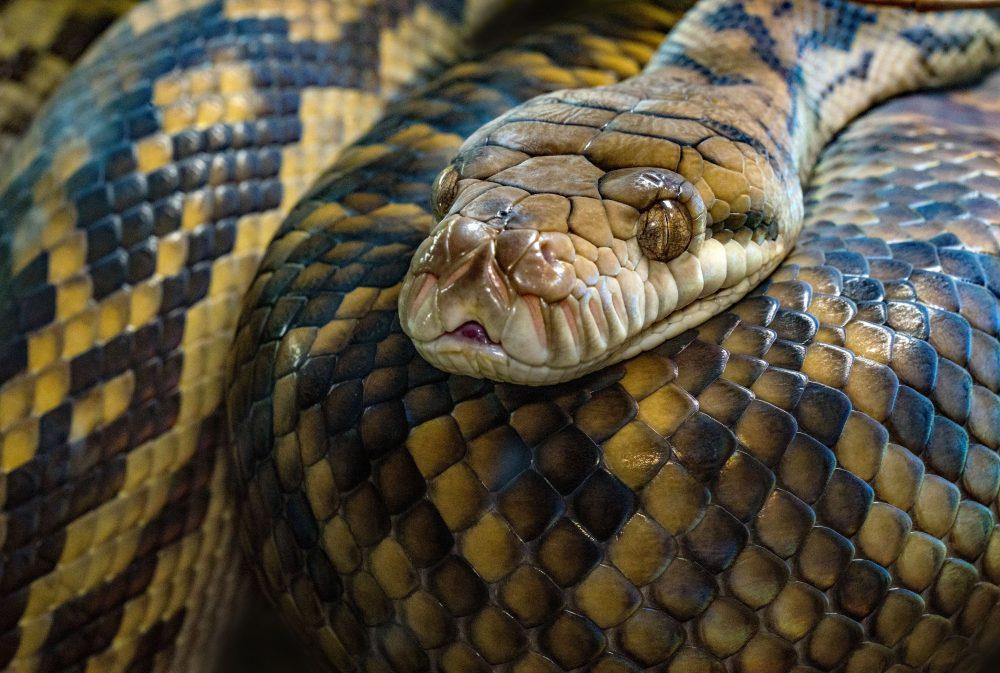 Ukąsił go wąż