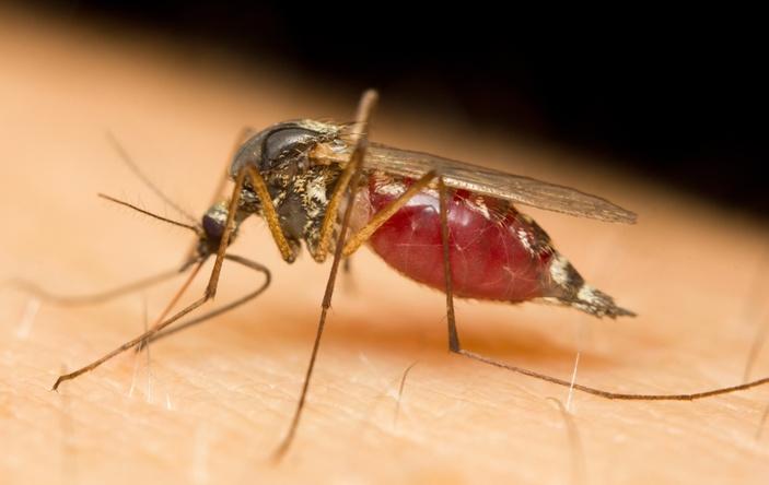 komary jakie choroby przenoszą
