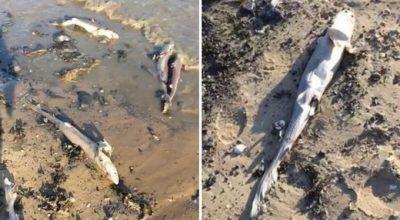 martwe rekiny