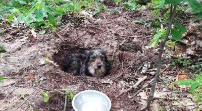 zakopał psa żywcem