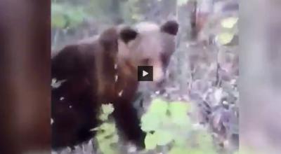 kopnął niedźwiedzia