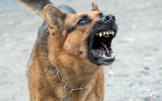 pies rozszarpał twarz kobiety