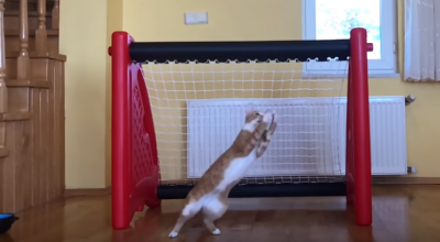 niesamowity kot bramkarz