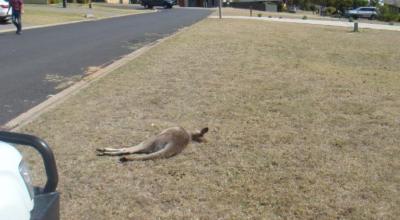 makabra w australii