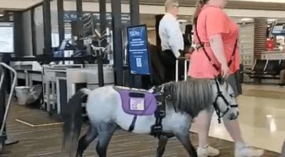 Kobieta weszła na pokład samolotu z koniem