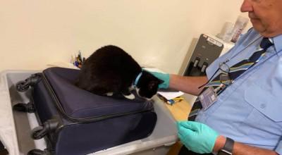 Kot w bagażu podręcznym