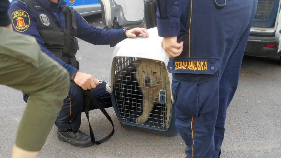 straż miejska odebrała psa