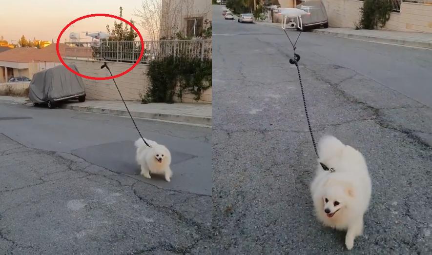 wyprowadza psa na spacer