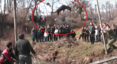 bułgarzy maltrerują psy