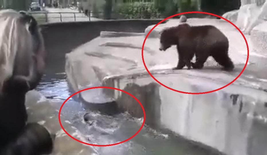 skandal w warszawskim zoo