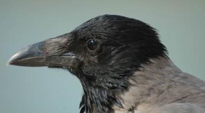 coraz więcej martwych ptaków
