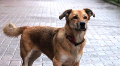 wrocław: wyrzucił małego psa