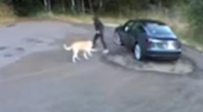 porzuciła psa w lesie