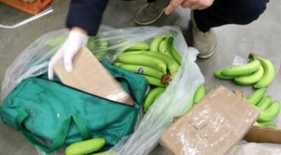 Kokaina w bananach