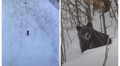 Dzika pogoń niedźwiedzia za