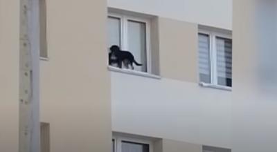 Wystawił psa za okno