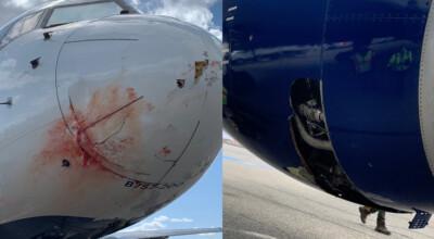 krew na dziobie samolotu