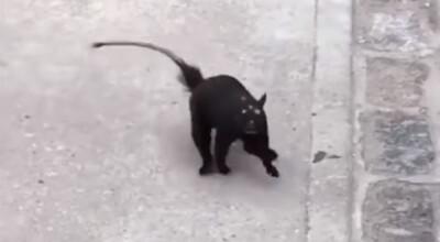 Nagranie przerażającego zwierza