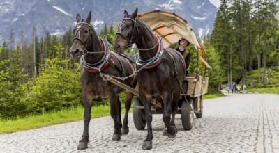 Hybrydowy wóz konny