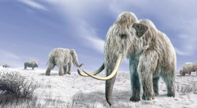 Ożyło zwierzę po 24 tys. latach