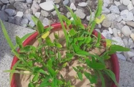 tajemnicze nasiona