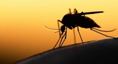 jak skutecznie odstraszyć komary