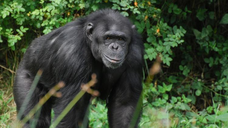 romans z małpą