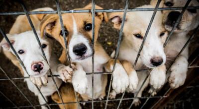 australia zastrzelono psy w schronisku